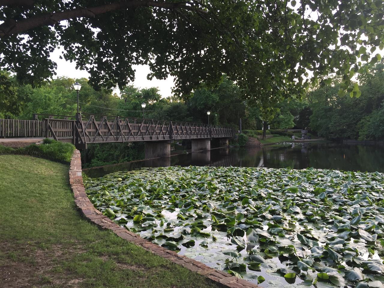 #Highland Park, #Turtle Creek, #Lakeside Park, waterlilies and bridge to Teddy Bear sculptures, #Dallas, #Texas