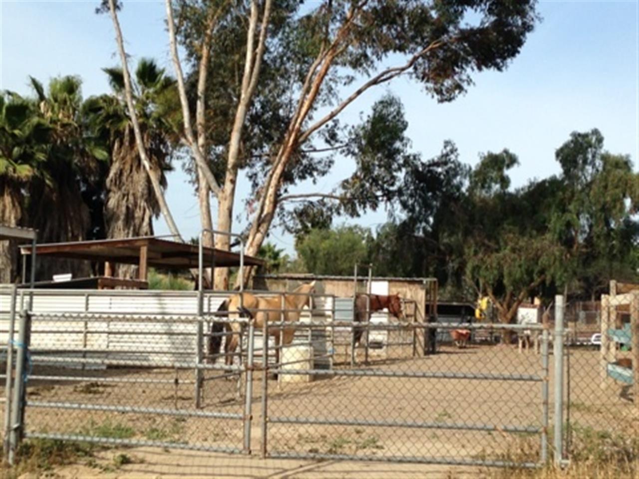 #Bonita #Horses #LeadingRElocal