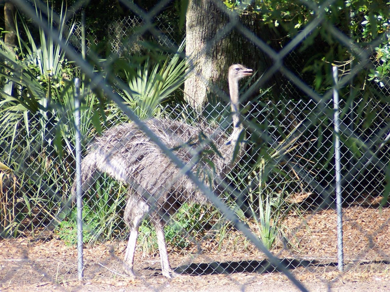 Shot from Beaks Bird Sanctuary off Heckscher Drive in Jacksonville, Florida