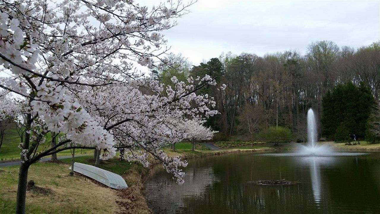 Meadowlark Botanical Gardens in Vienna, VA