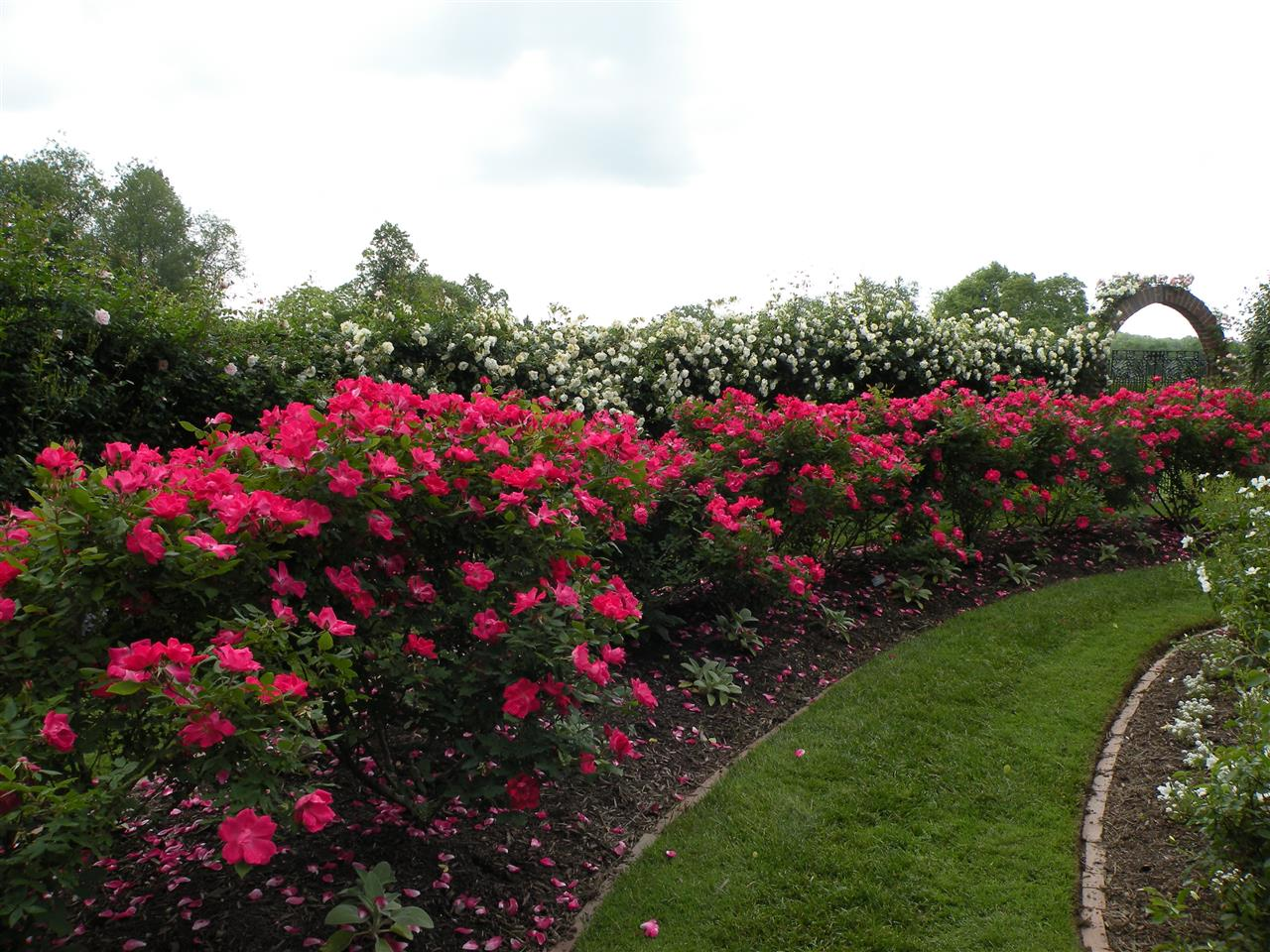 Rose Wall at Ladew Topiary Garden, Monkton, MD