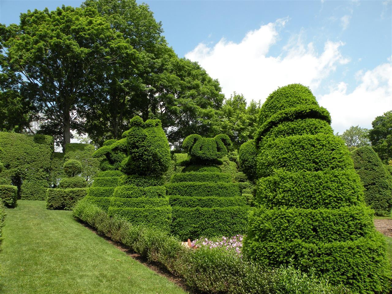 Figure plants at Ladew Topiary Garden, Monkton, MD