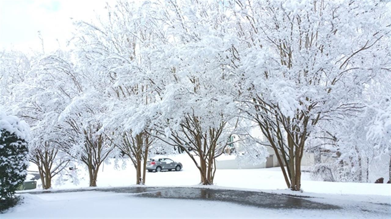 Snow in Lewisville, NC, 2015.