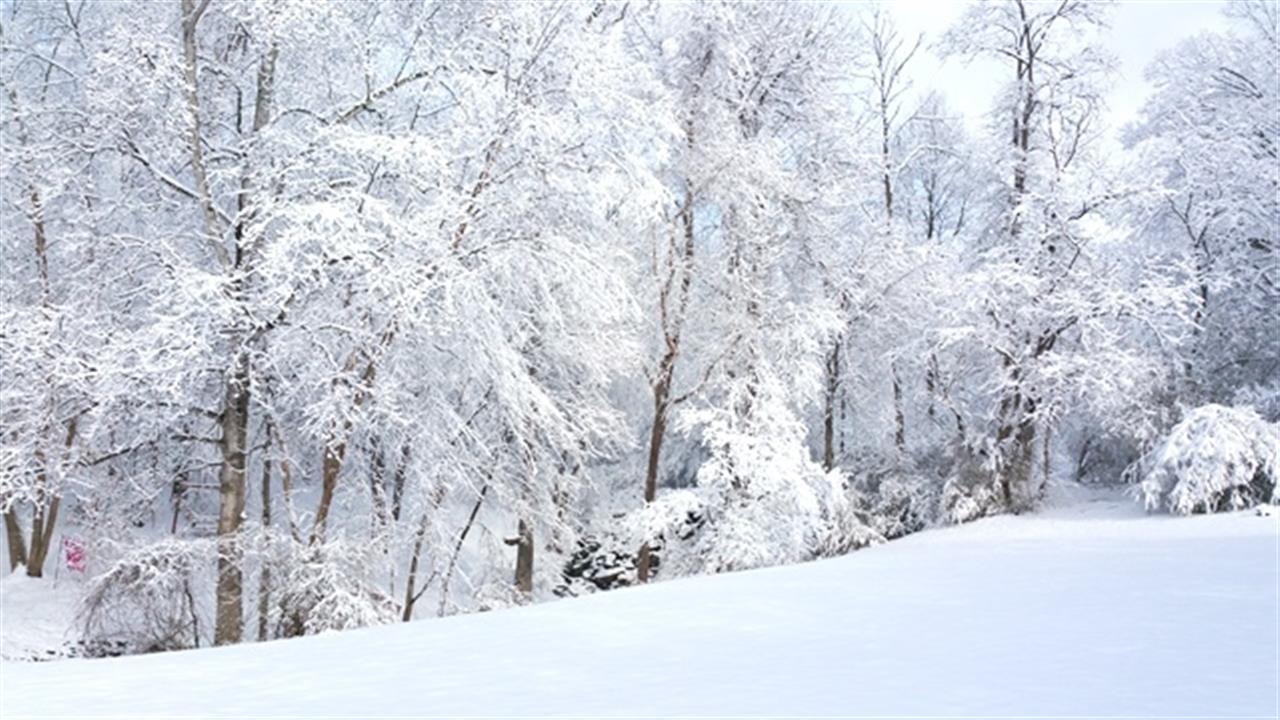 Backyard snow 2015 in Lewisville, NC