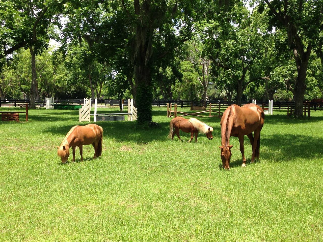 Moss Creek Plantation, Hilton Head Island SC, Equestrian Center