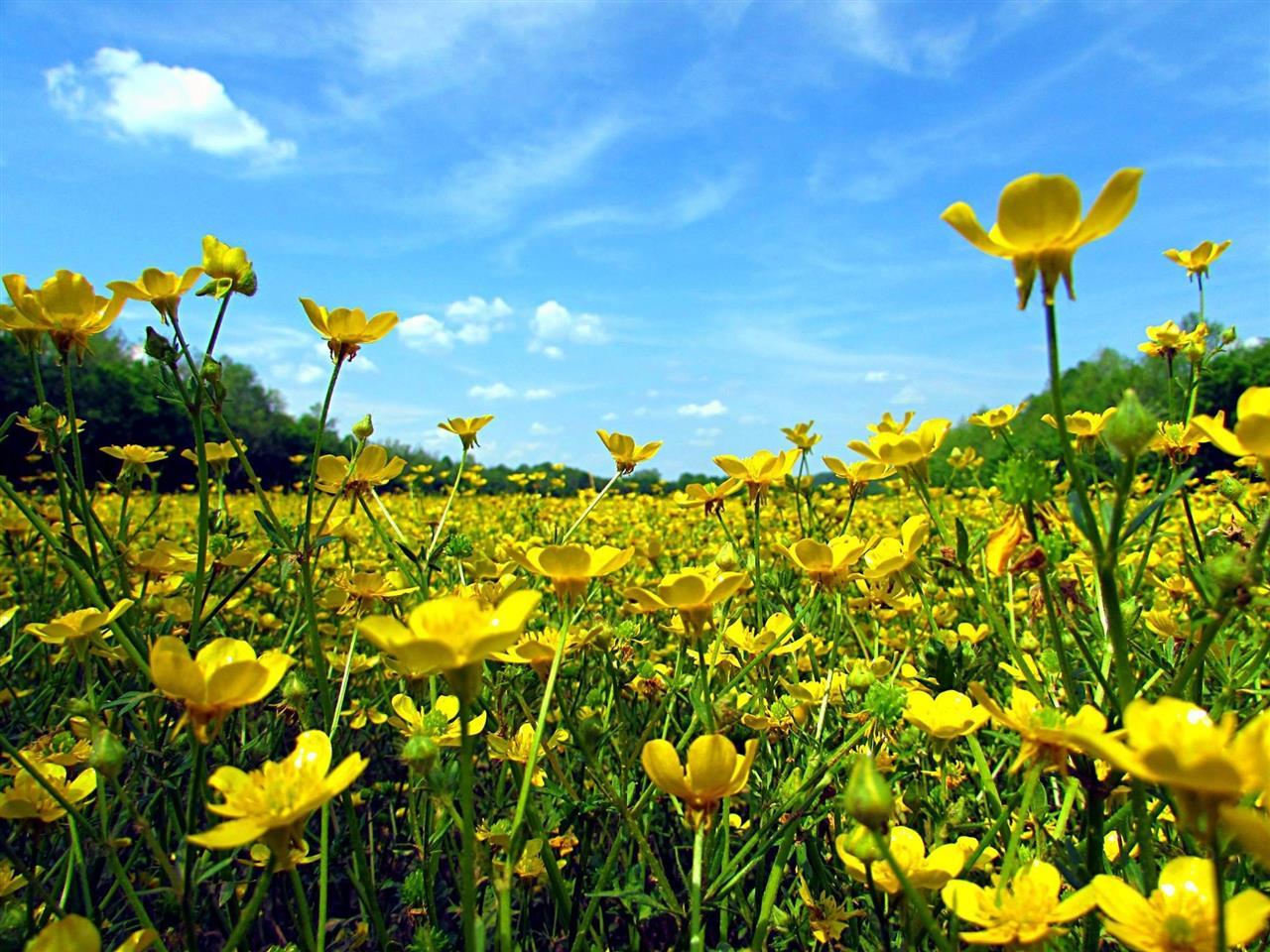 Beautiful field in Rockingham County