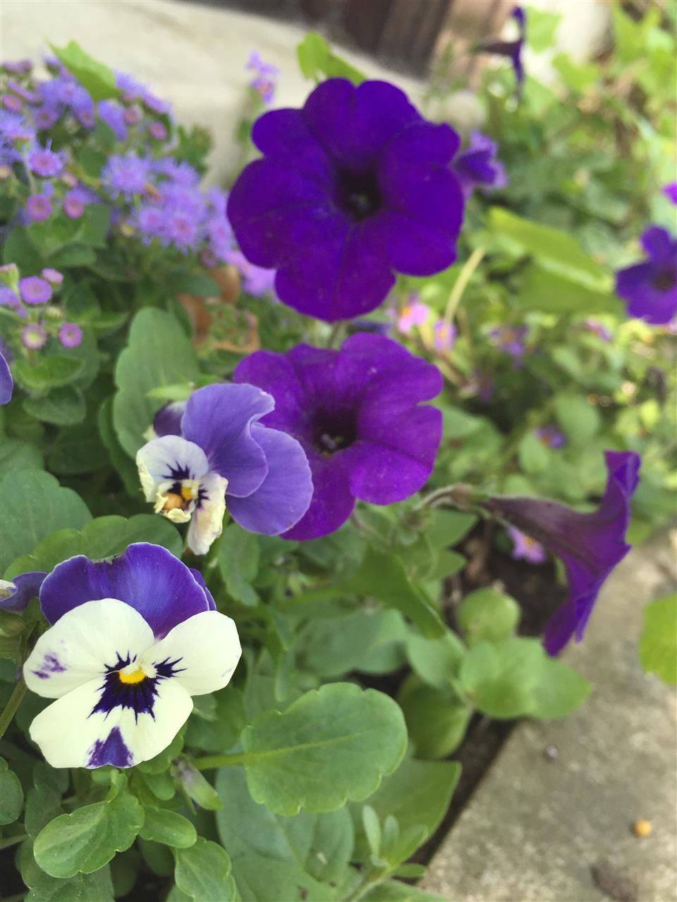 Flowers in bloom. Birmingham, Michigan #LeadingRElocal #Birmingham #Michigan