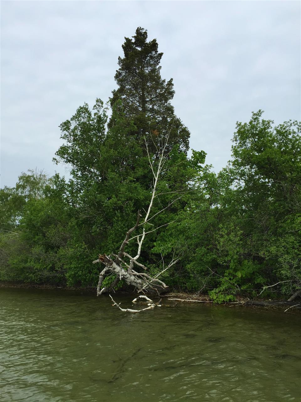 Cedar Island shoreline in Orchard Lake. Orchard Lake, Michigan #LeadingRElocal #OrchardLake #Michigan