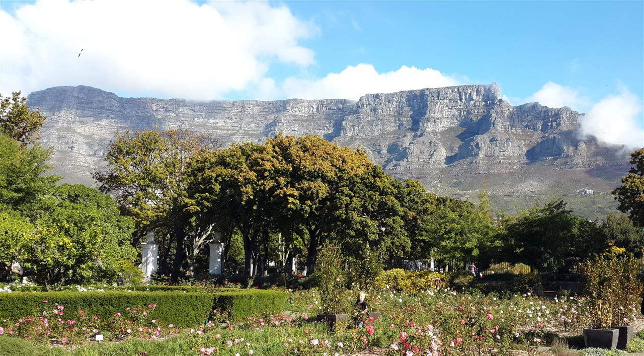 The majestic Table Mountain as seen from the Company Gardens in Cape Town.
