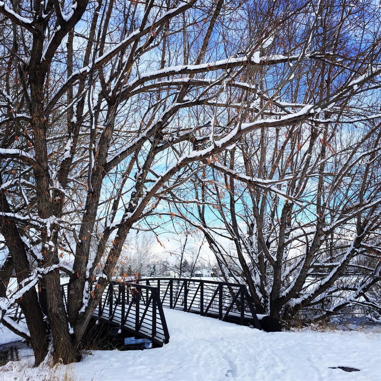 Snowy Bridge, Coal Creek Trail, Louisville, CO