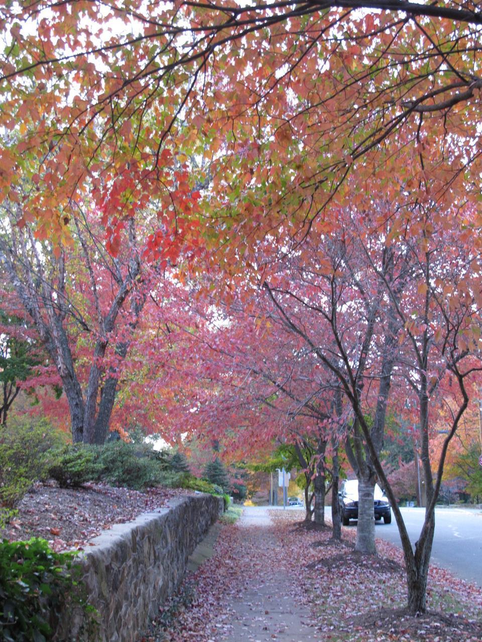 Fall street scene,Washington Park,Winston-Salem,NC