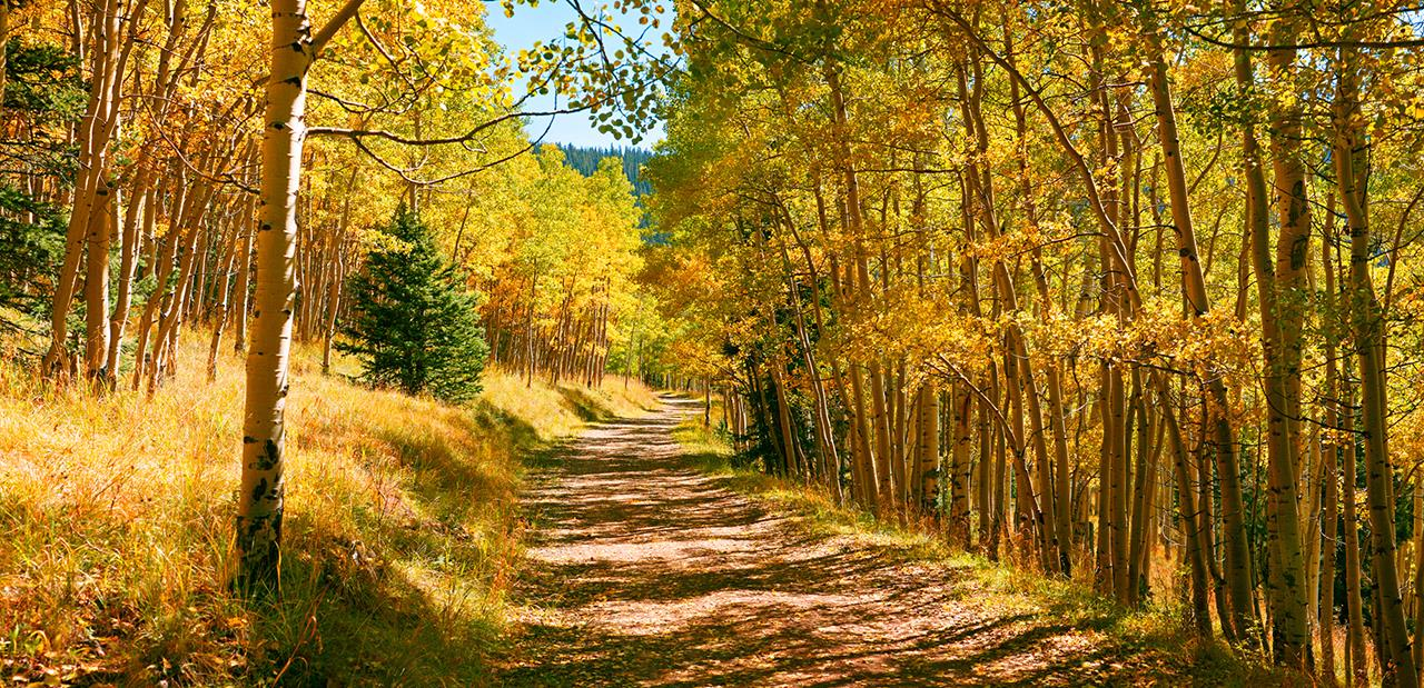 #Taos attraction #Fall Color #Aspen Alley #Taos #New Mexico