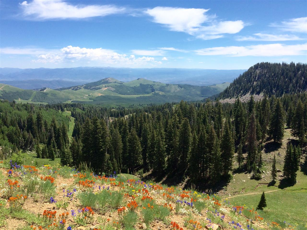 A view from a hike at Peak 10420' properly named per its elevation at Guardsman's Pass. #hike #guardsmanspass #deervalley #midway #parkcity #Utah #wildflowers #leadingrelocal