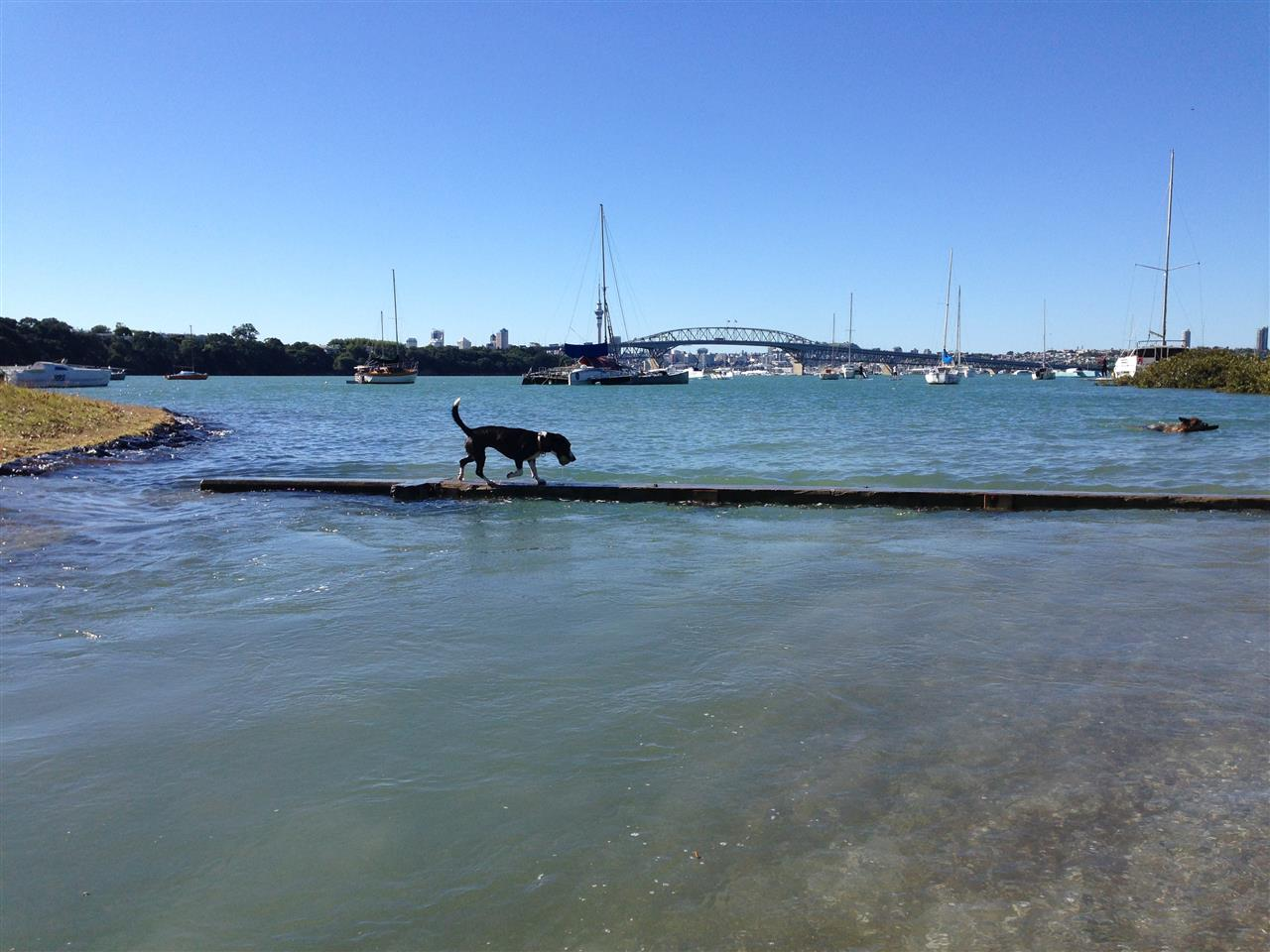 Waterfront walks  Auckland, New Zealand #LeadingRElocal