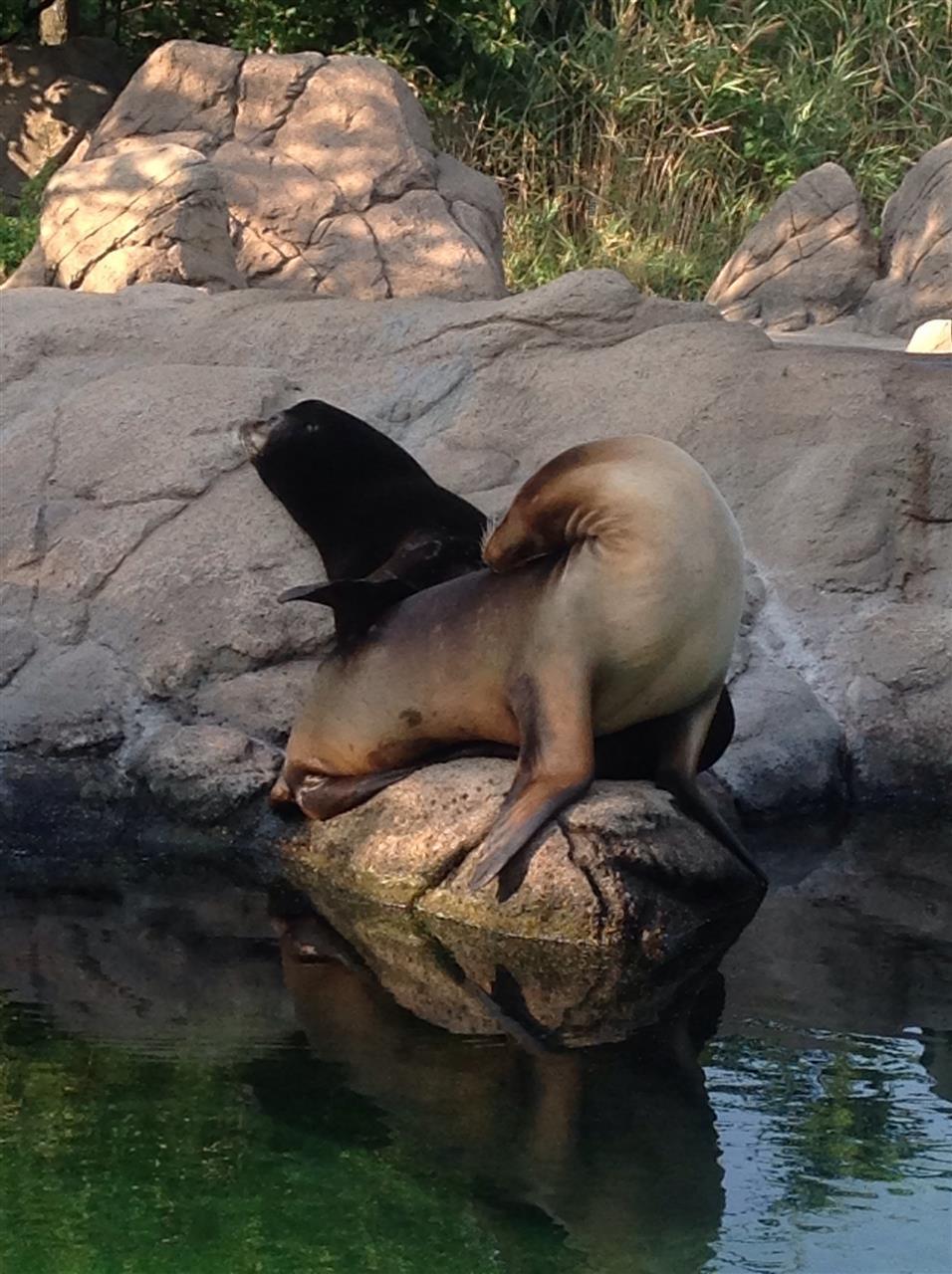 Bronx Zoo , NY