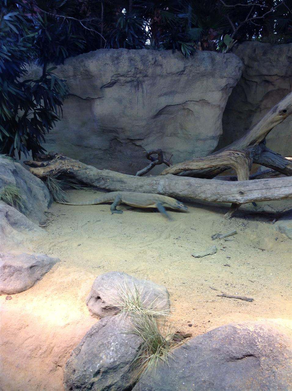 Bronx Zoo, NY