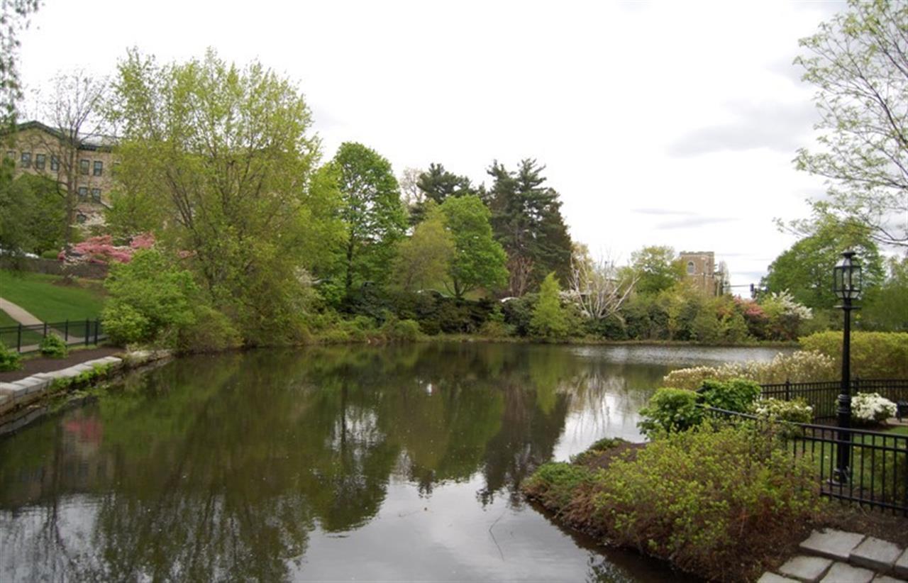 Winchester Pond | Winchester, MA