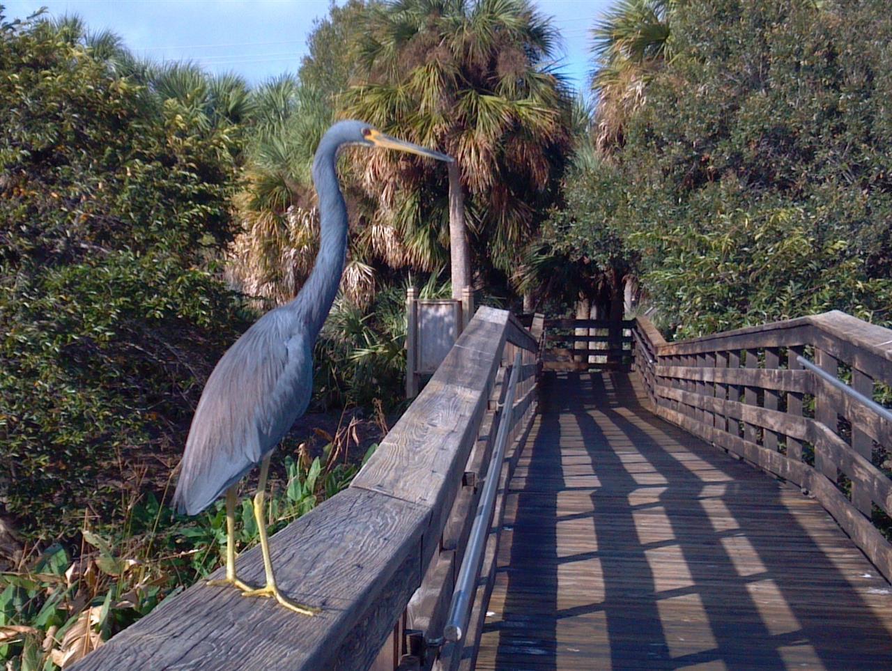 Wakodahatchee Nature Preserve, Delray Beach, FL