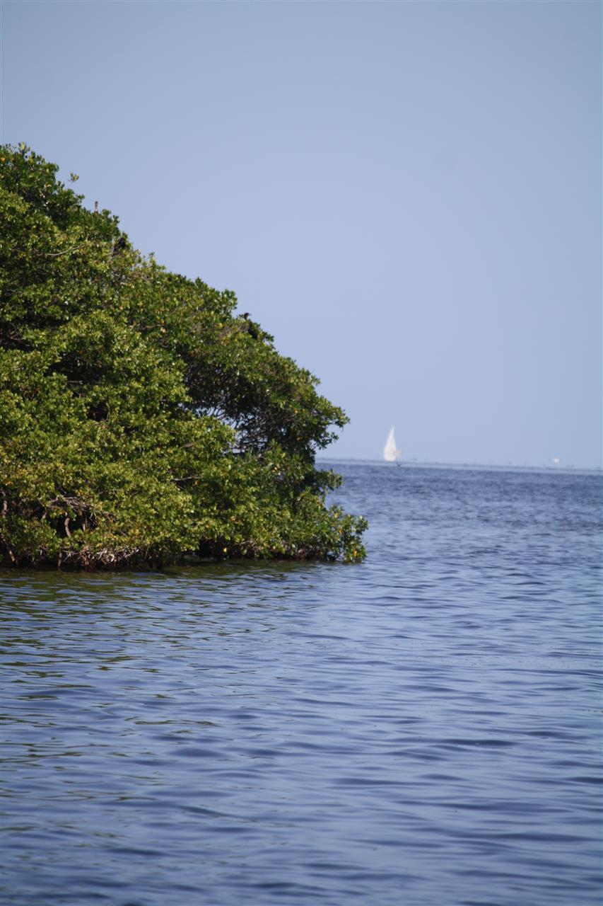 Deering Estate, Miami, #LeadingRELocal #soflo