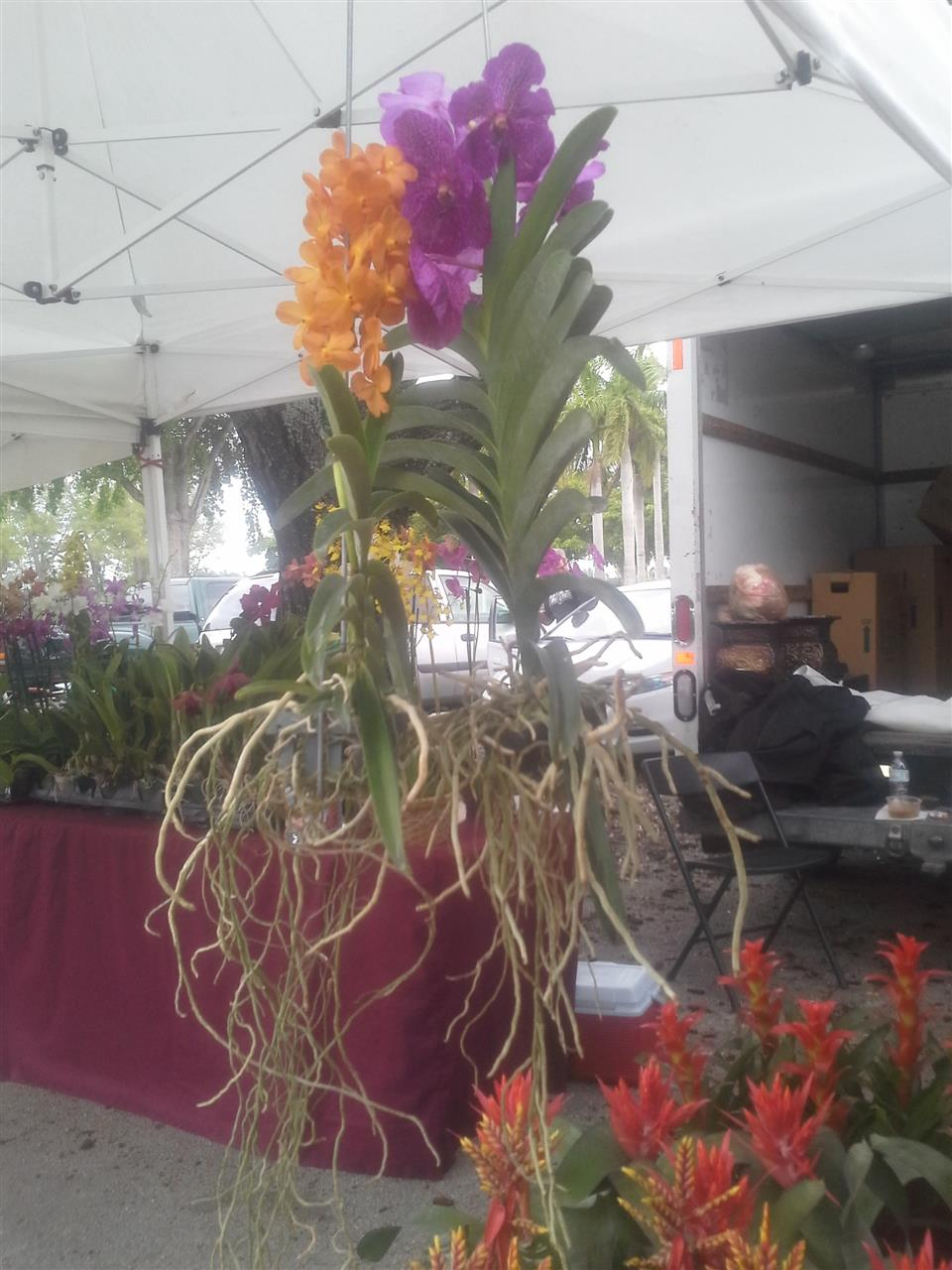 Orchids for sale, Farmers Market, Tropical Park, Miami #leadingRelocal, #soflo
