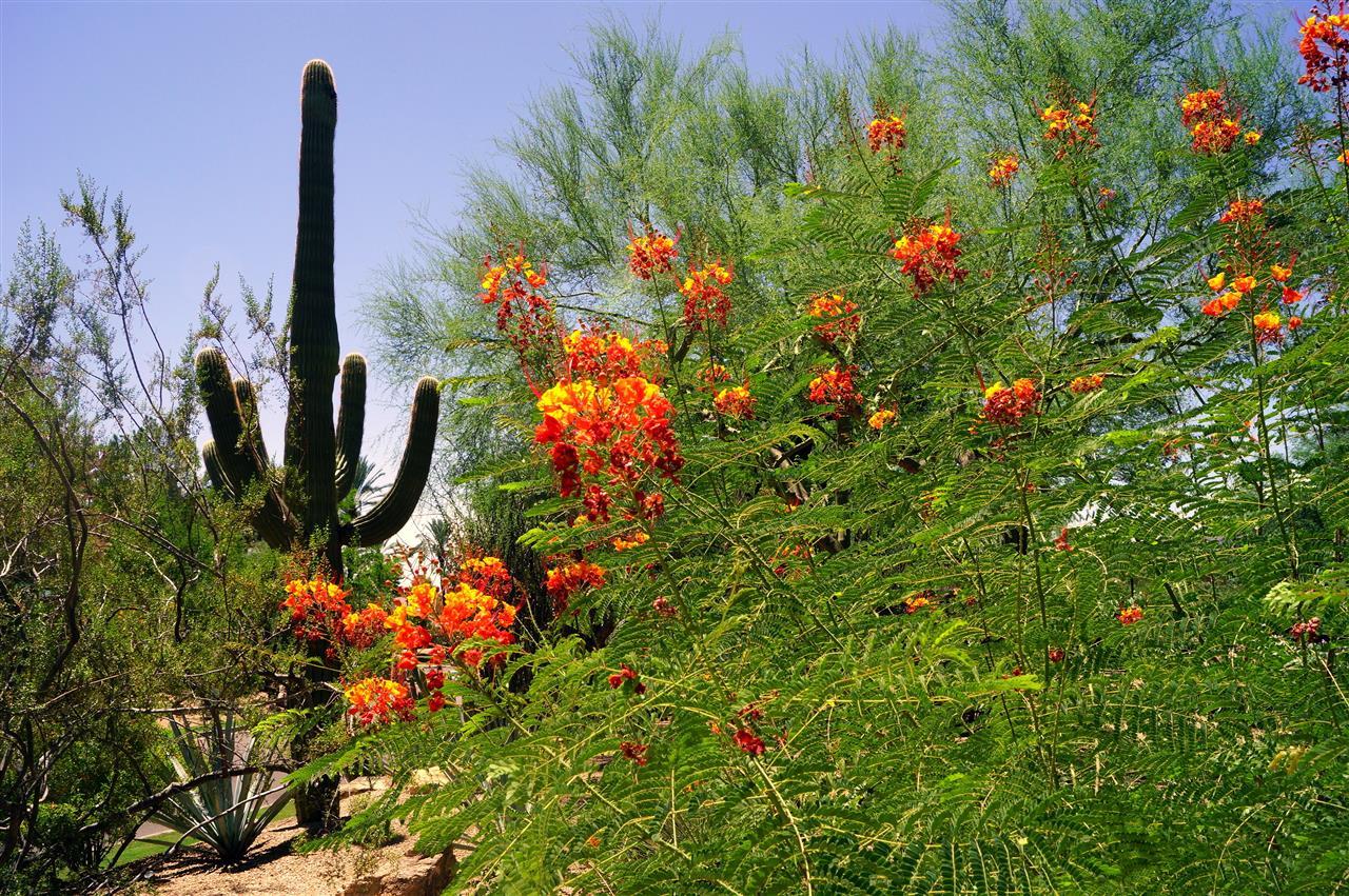 The amazing desert in Scottsdale, AZ.