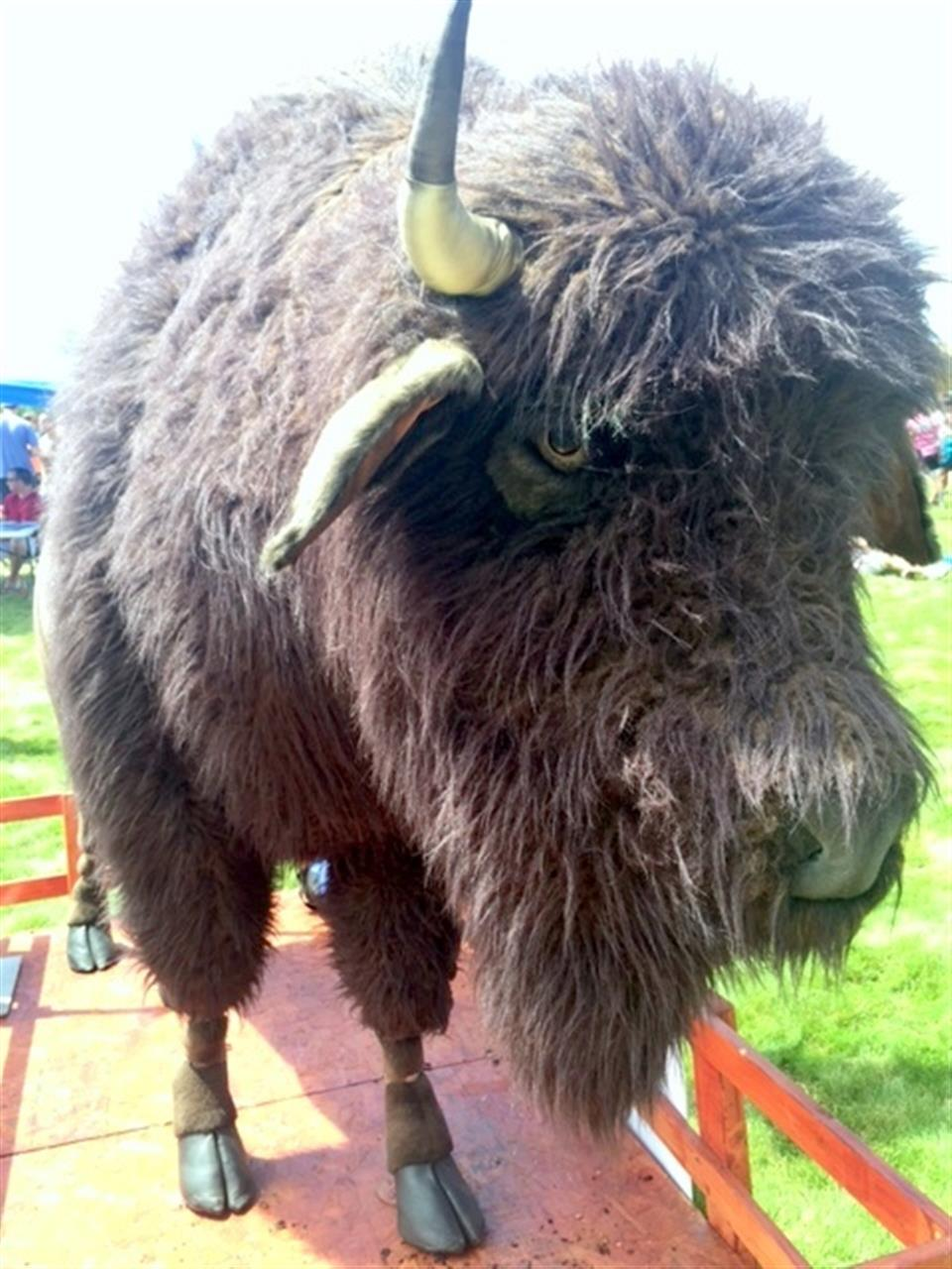 """""""Ralphie"""" the CU Boulder Mascot (this is not the real Ralphie - this is a fake Ralphie :)"""
