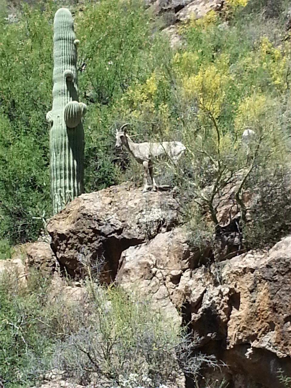 Wildlife at Saguaro Lake near Scottsdale, AZ