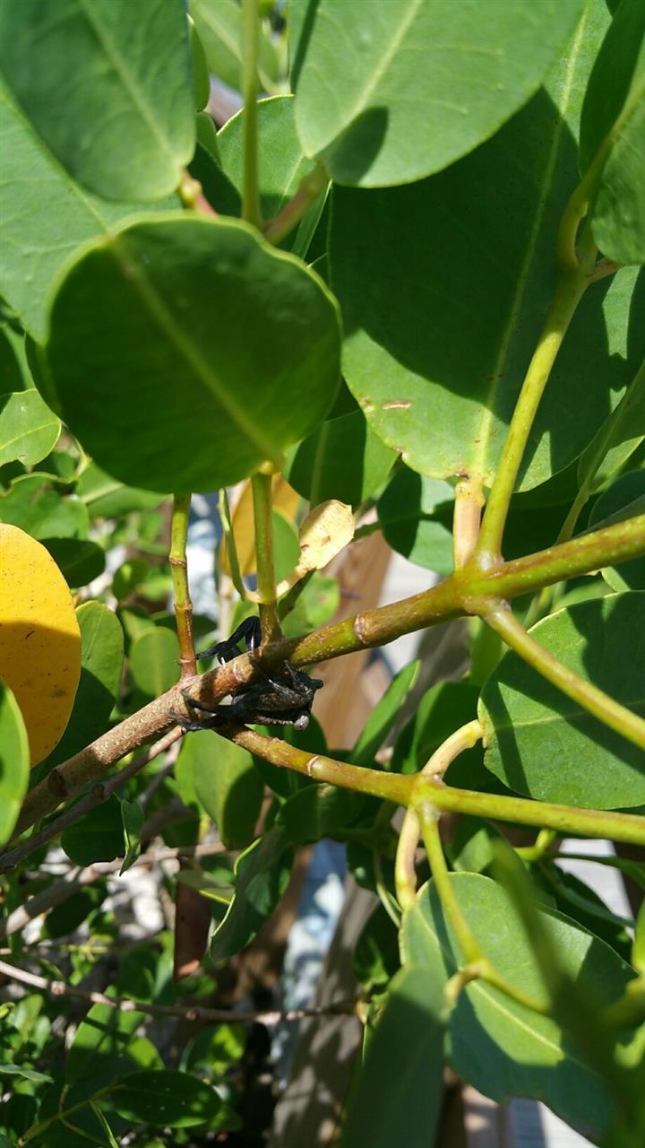 #Florida #Bradenton #RobinsonPreserve #LittleCrab