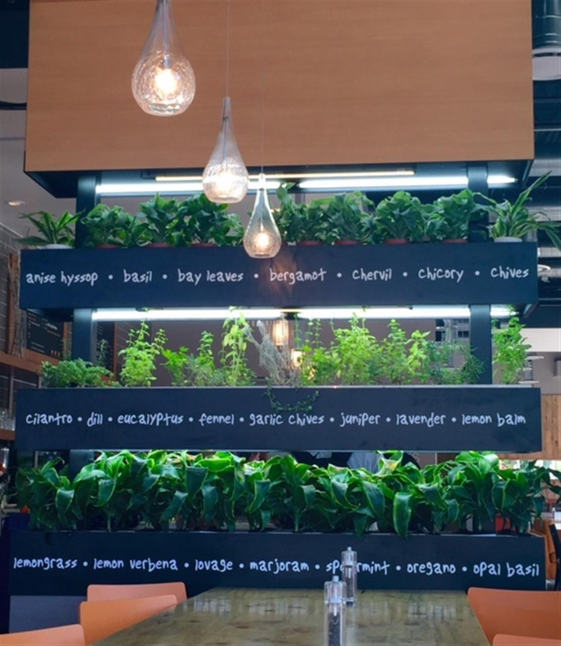 Fresh herb garden in Lyfe Kitchen - a restaurant on Pearl St in Downtown Boulder