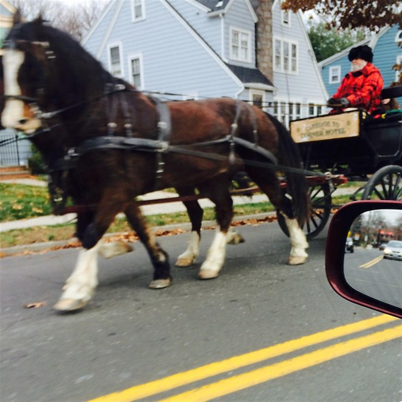 Don't see this in Fairfield very often. #fairfieldct #Fairfield #horses #LeadingRELocal