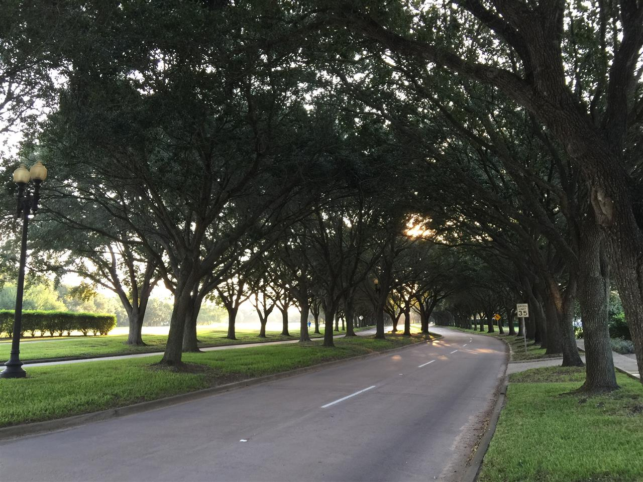Beautiful Palm Royale Blvd in Sweetwater.  Sugar Land, TX.