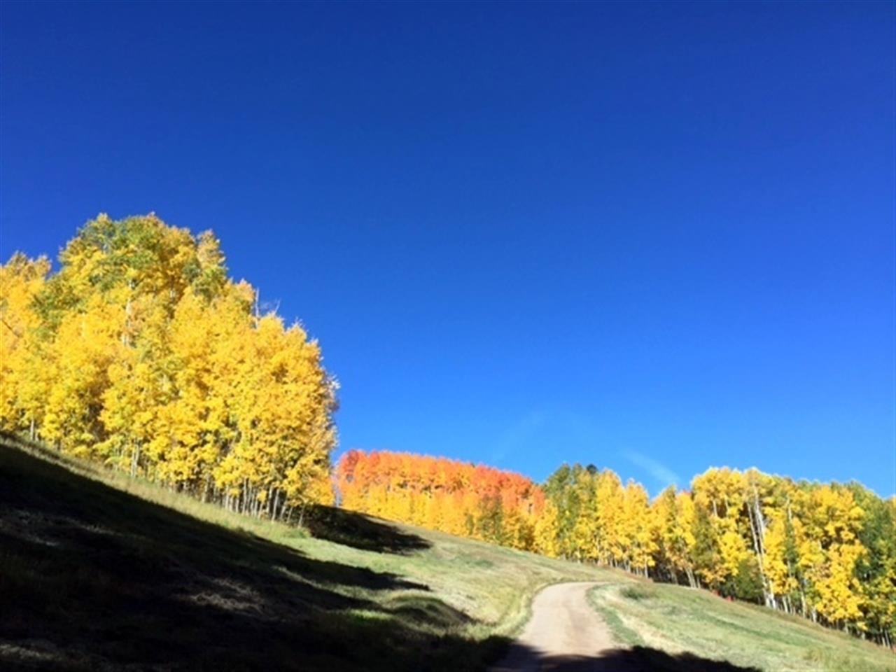 Fall colors in Vail CO