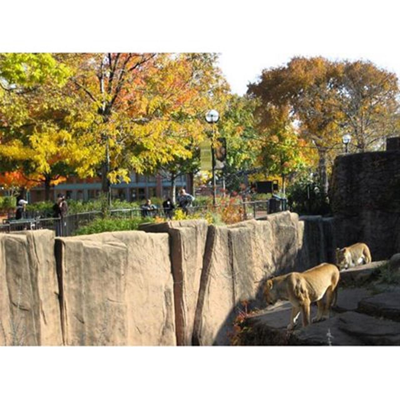 Day prowlers #lincolnparkzoo #chicago #leadingrelocal