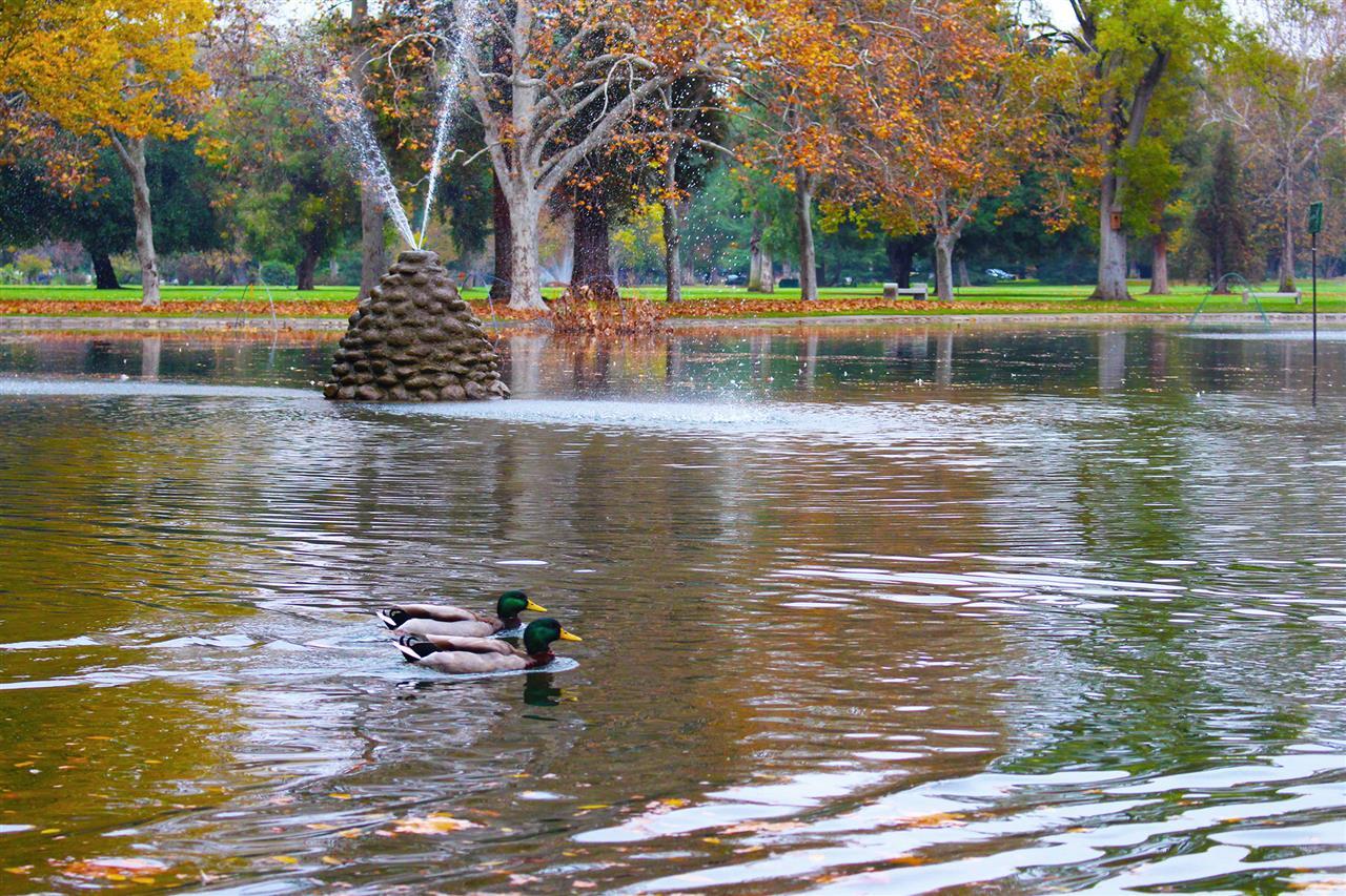 William Land Park Sacramento, CA #LeadingRELocal  #LyonRealEstate