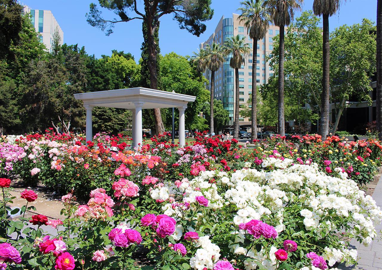 Capitol Rose Garden Sacramento, CA #LeadingRELocal  #LyonRealEstate