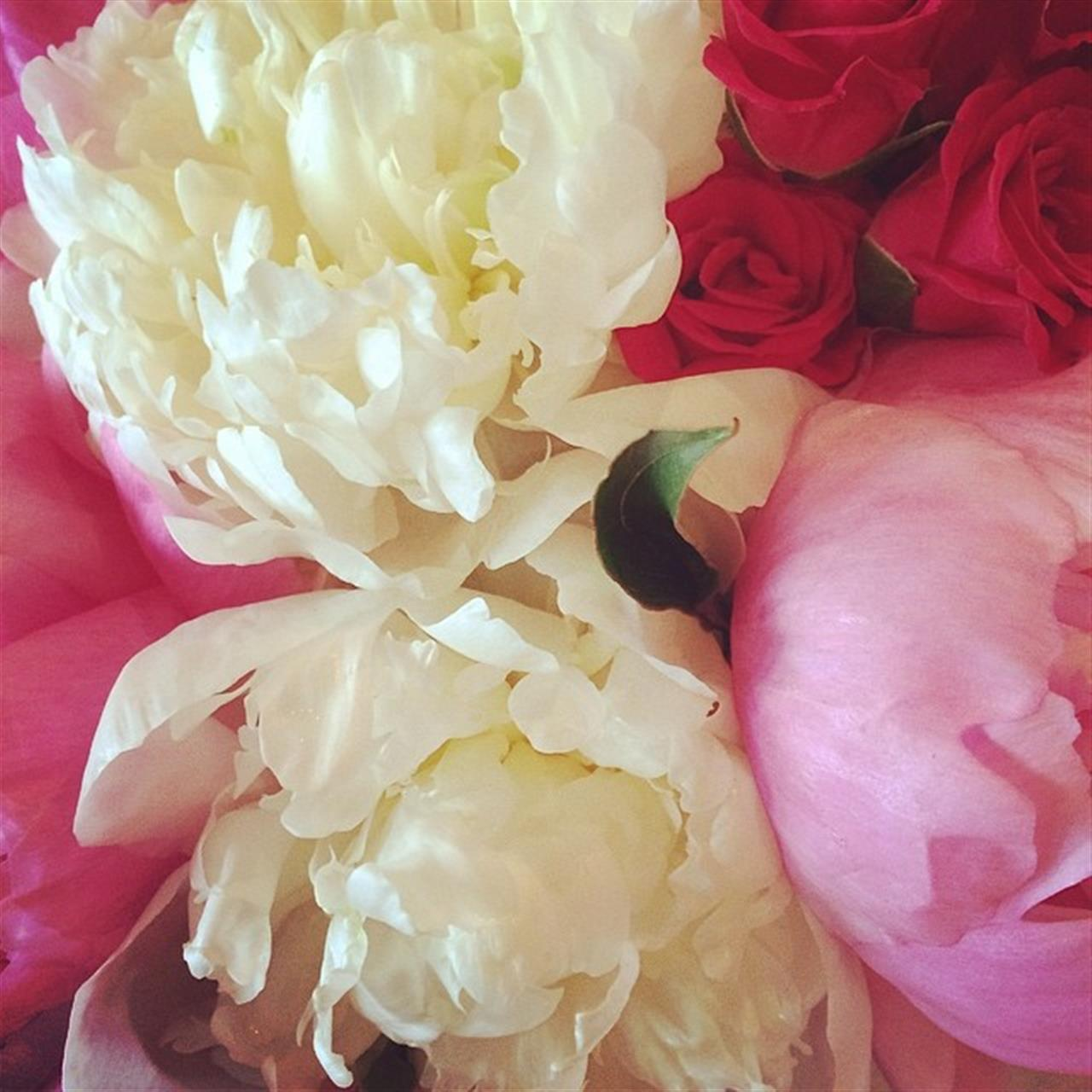 Roses & perfect pink ponies ? #bouquet #bridesmaid #hunniwedding #LeadingRELocal #VeroBeach