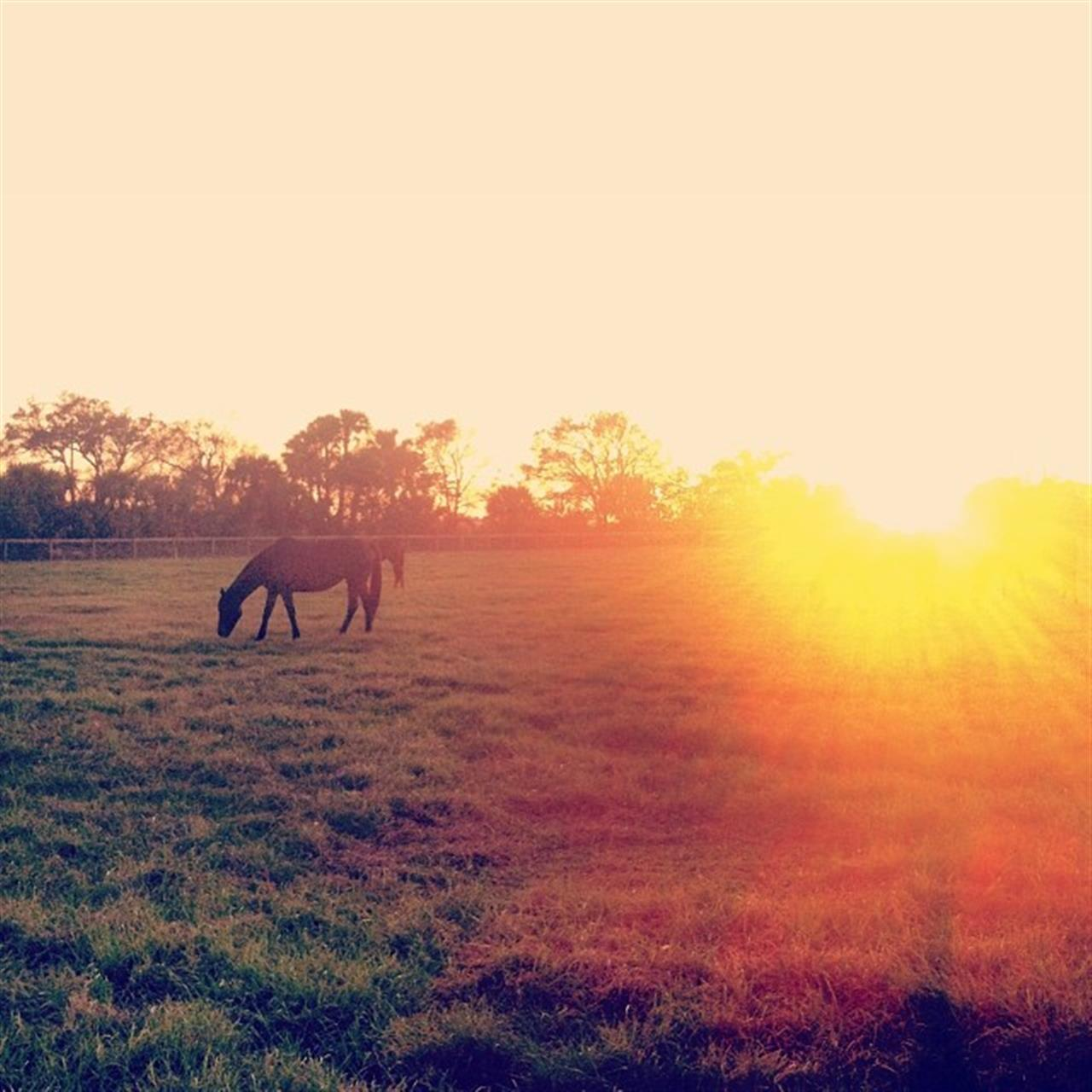 Horses & a Florida sunset. My happy place ? #homesweethome #farmlife #florida #sunset #horses #LeadingRELocal #VeroBeach