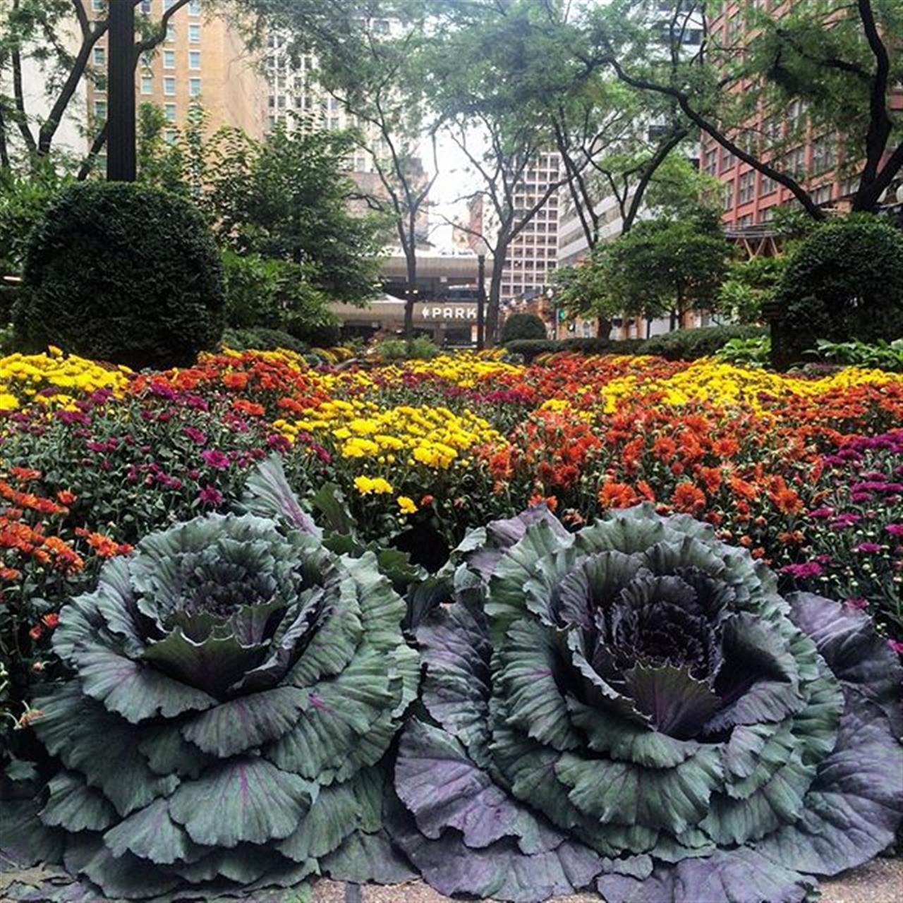 Foliage and flowers #chicago #theloop #leadingrelocal #fall