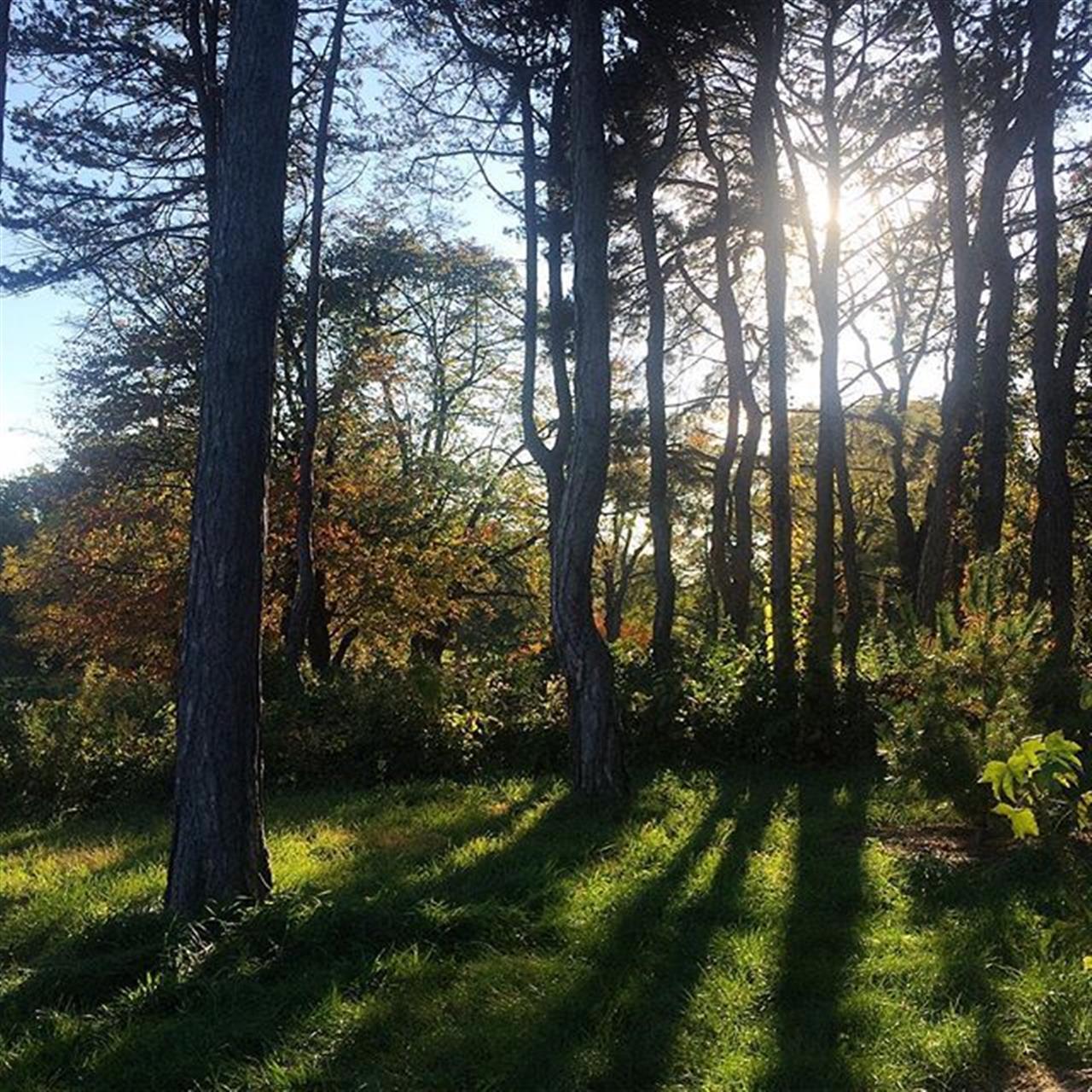 Among the trees #mortonarboretum #lisle #chicago #leadingrelocal #bairdandwarner