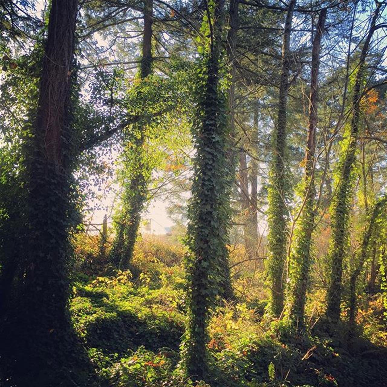 #sneakpeek #newlistingcomingthisweek #notallhousesaremoveinready #dfhrealestate #leadingrelocal #beautifulproperty #rural #trees