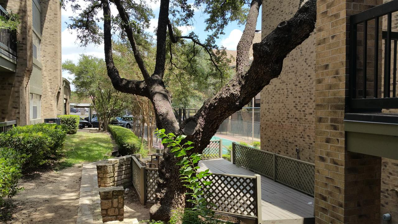 Arboretum Austin - cool tree on the premises of Tallwood Condos