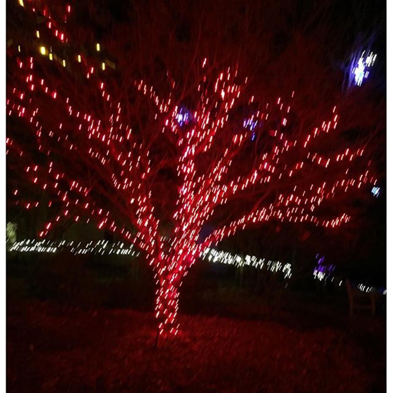 #tower hill #botanicalgardens #holidaylights #boylstonma #leadingrelocal