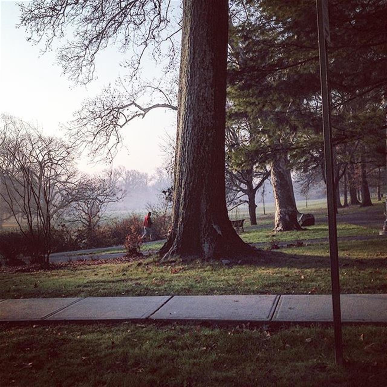 60 degrees in December ...I'll take it!???????#bairdhalstead #love #peace #parkslope #montclairnj # #halstead #halsteadproperty #cedargrovenj #exploreyourhood #leadingrelocal #thursday #nature#nj #ny #park