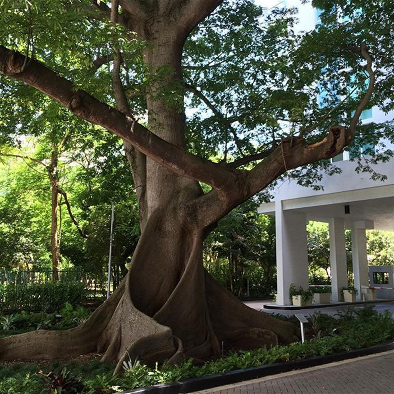 #KapokTree #MiamiRiverDistrict #TerrazasMiami #LeadingRELocal