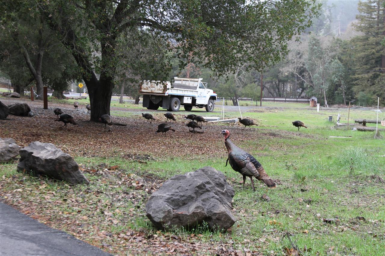 Wildlife at the Lafayette Reservoir Recreation Area. Lafayette photos