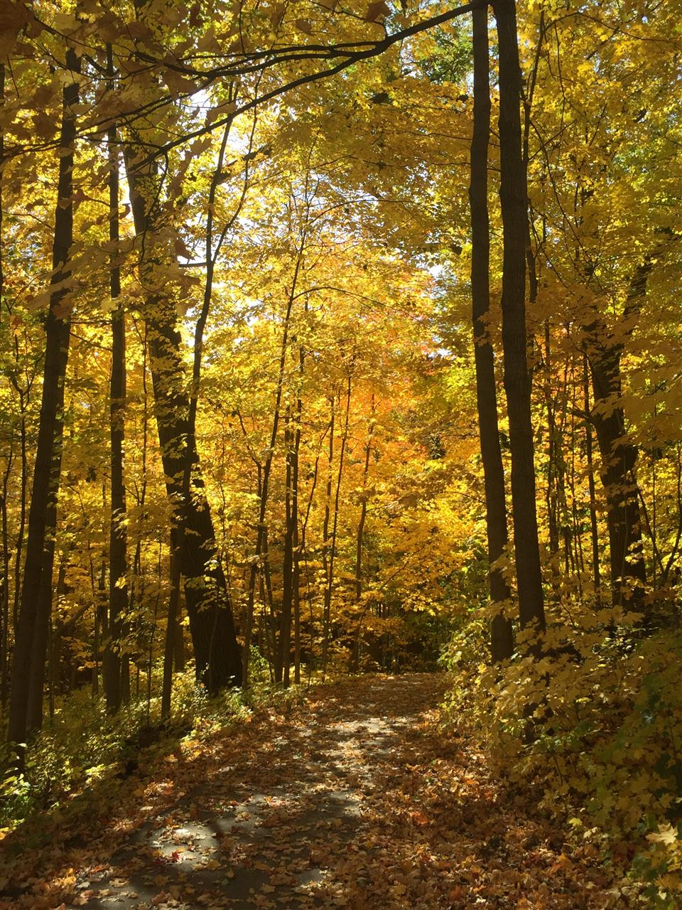 Walking trails in Greendale, WI