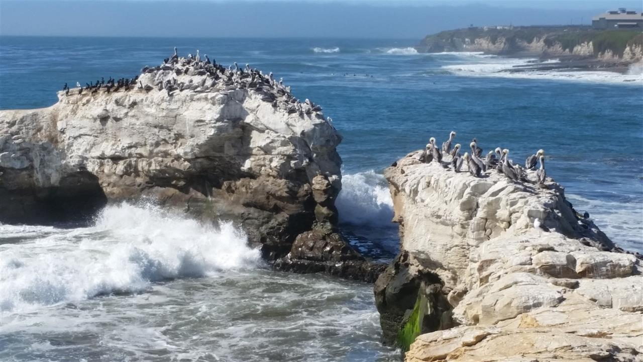 Natural Bridges State Park- Santa Cruz, CA