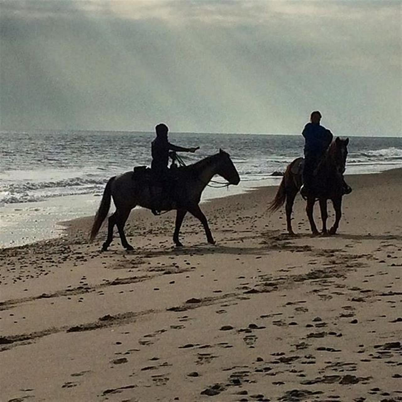 Beautiful winter day for a ride on the beach #horses #riding #beach #rhodeisland #outdoors #adventure #enjoylife #leadingRE #lovelife #havefun #adventure #play #photography #southkingstown #rhodeisland