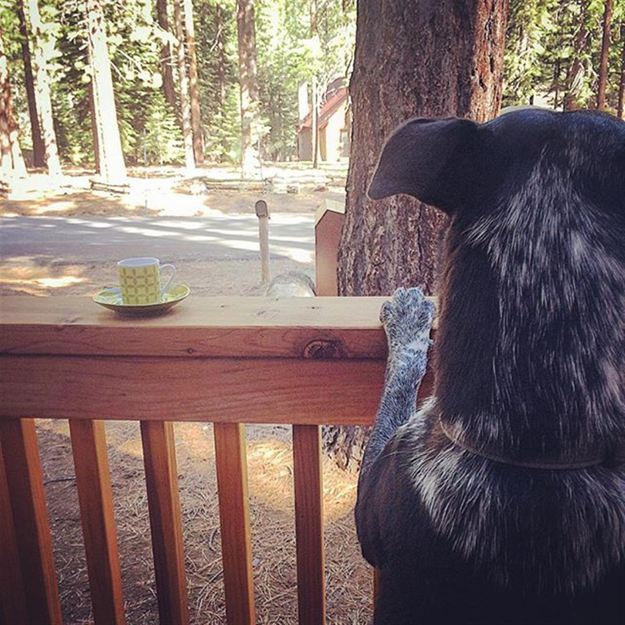 I LOVE mornings in my neighborhood! Morning coffee with my pup, great neighbors, the trees, the air, and the (cheeseburger) birds are out! ??#pioneertrail #southlaketahoe #southlakehomes #jctahoehomes #tahoerealtor #southlaketahoerealestate #leadingrelocal #leadingrealestatecompaniesoftheworld #pinnaclerealestate