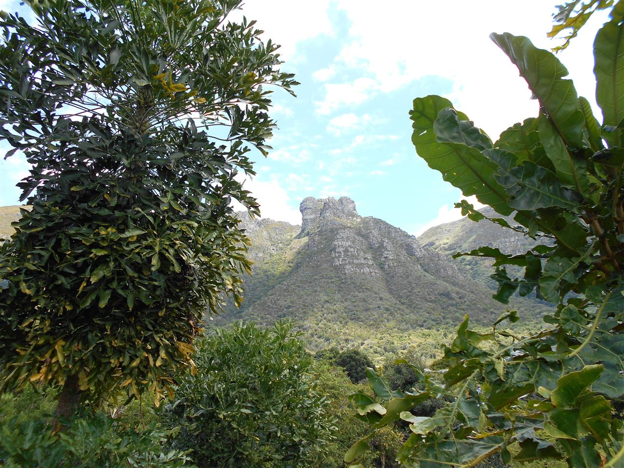 Cape Town, South Africa - view of Skeleton Gorge from Kirstenbosch Botanical Gardens